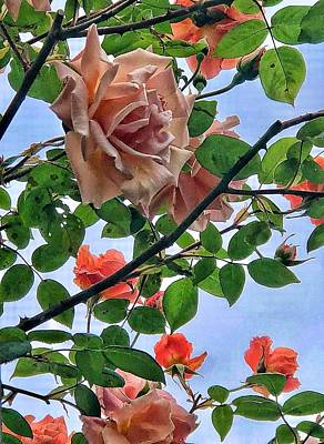 Photograph - Seattle Roses Martinez Style by Renee Marie Martinez