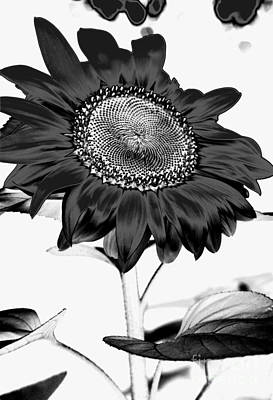 Photograph - Seattle Sunflower Bw Invert - Stronger by Heather Kirk