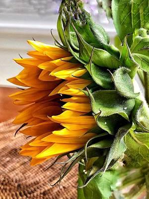 Photograph - Seattle Sunflower by Renee Marie Martinez