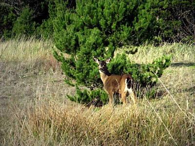 Photograph - Seaview Deer by Joyce Dickens