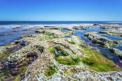 Photograph - Seaweed And Salt Landscape. by Gary Gillette