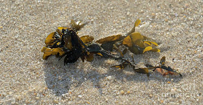 Photograph - Seaweed And Sand II by Mary Haber
