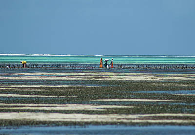 Photograph - Seaweed Colectors by Mache Del Campo