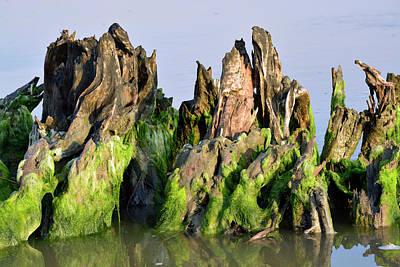 Seaweed-covered Beach Stump Art Print by Bruce Gourley