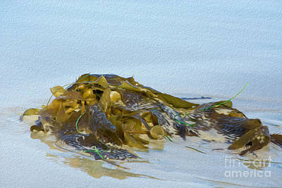 Photograph - Seaweed  by Leah McPhail