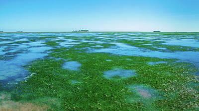 Photograph - Seaweed Near Hooge by Sun Travels