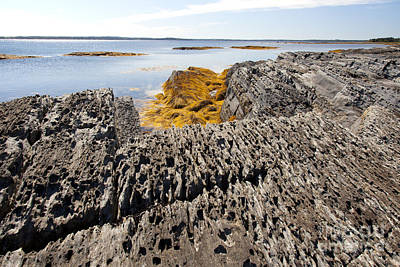 Photograph - Seaweed On Rocky Coast by Nick Jene