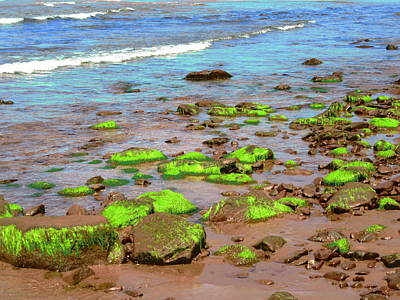 Photograph - Seaweed On The Rocks by Stephanie Moore