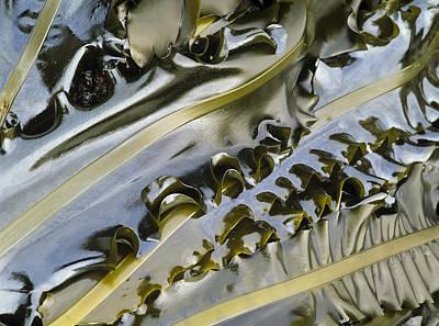 Photograph - Seaweed by Robert Potts