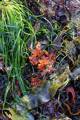 Photograph - Seaweed Still Life by Kathleen Bishop