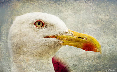 Photograph - Sebastian The Seagull by Weston Westmoreland