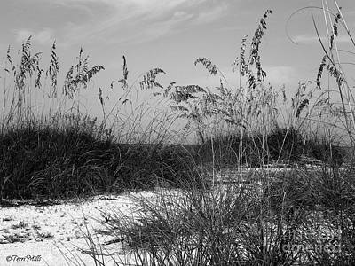 Photograph - Seclusion by Terri Mills