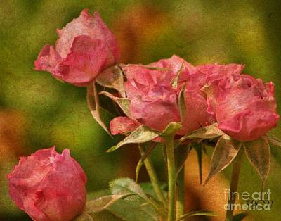 Photograph - Second Hand Roses by Barbara S Nickerson