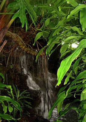 Photograph - Secret Falls by Melinda Dare Benfield