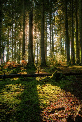 Photograph - Secret Forest by Geoff Smith