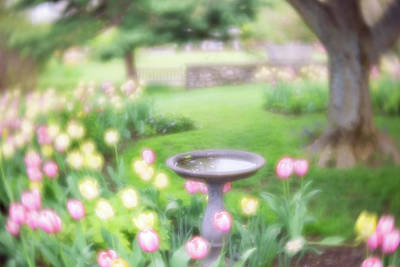 Photograph - Secret Garden 1 by Brian Hale