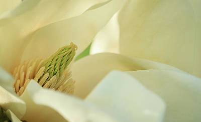 Photograph - Secret Inner Magnolia by Joni Eskridge
