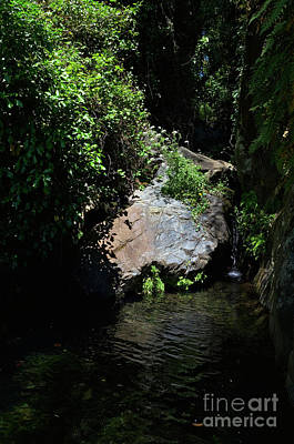 Photograph - Secret Nature In Almonaster, Spain by Angelo DeVal