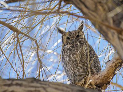 Photograph - Secret Owl by Loree Johnson