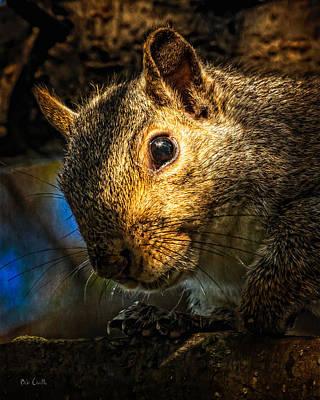 Photograph - Secret Squirrel   by Bob Orsillo