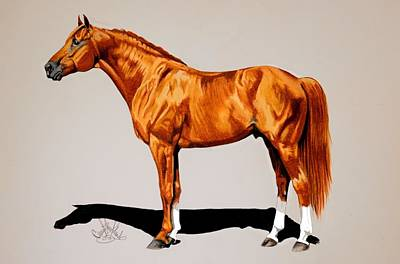 Drawing - Secretariat - Triple Crown Winner By 31 Lengths by Cheryl Poland