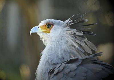 Secretary Bird I Original