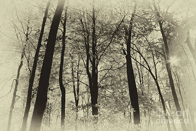 Photograph - Secrets Of The Forest by Karen Adams