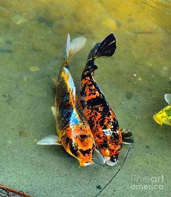 Photograph - Secrets Of The Wild Koi 15  by September  Stone
