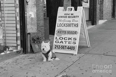 Photograph - Security Dog  by Cole Thompson