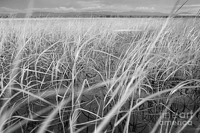 Photograph - Sedge #0186 by Andrey Godyaykin