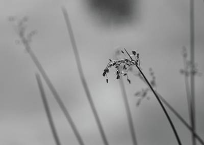Photograph - Sedge #1 by Photography by Tiwago