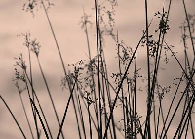 Photograph - Sedges #3 by Photography by Tiwago