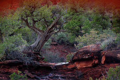 Photograph - Sedona #1 by David Chasey