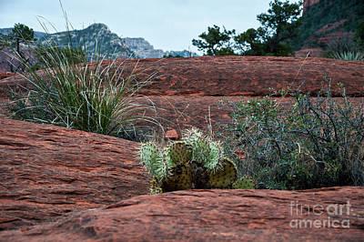 Photograph - Sedona Cactus by Kirt Tisdale