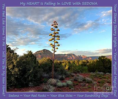 Photograph - Sedona Century Plant Sedona Lyrics 16x20 by Marlene Rose Besso