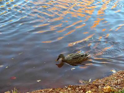 Photograph - Sedona Duck Oak Creek by Marlene Rose Besso