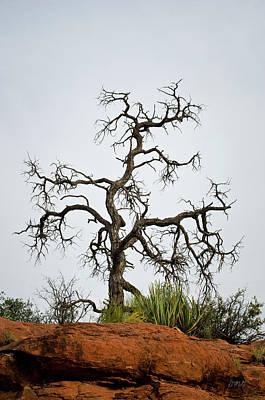 Photograph - Sedona Landscape Vii by Dave Gordon