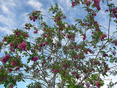 Photograph - Sedona Lilac Tree by Marlene Rose Besso