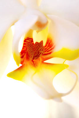 Photograph - Seductive Is The Orchid by Michael Hope