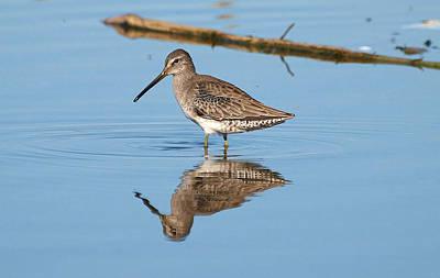 Rare Bird Sighting Photograph - See Ya Next Year by Kala King