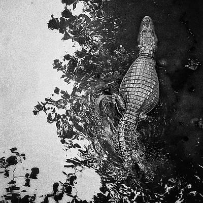 Reptiles Wall Art - Photograph - See You Later... #crocodile #alligator by Rafa Rivas