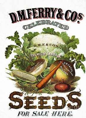 1880s Photograph - Seed Company Poster, C1800 by Granger