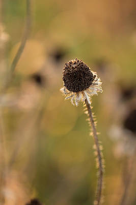 Southern Indiana Autumn Photograph - Seed Head by Andrea Kappler