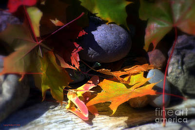 Colorful Leaves Photograph - Seed by Larry Keahey