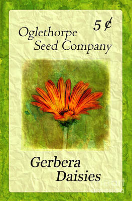 Photograph - Seed Packet -- Gerbera Daisies by Judi Bagwell