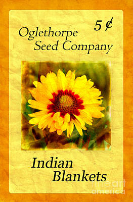 Photograph - Seed Packet -- Indian Blankets by Judi Bagwell