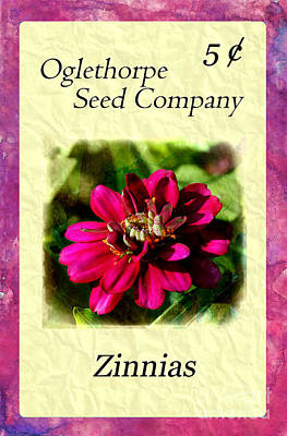 Photograph - Seed Packet -- Zinnias by Judi Bagwell