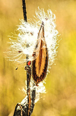Mauverneen Blevins Photograph - Seed Pod by Mauverneen Blevins