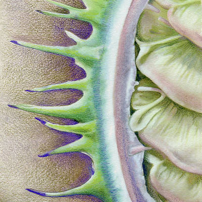 Nature Abstract Drawing - Seed Pod by Mindy Lighthipe