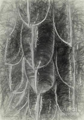 Photograph - Seed Pods Sketch by Jean OKeeffe Macro Abundance Art